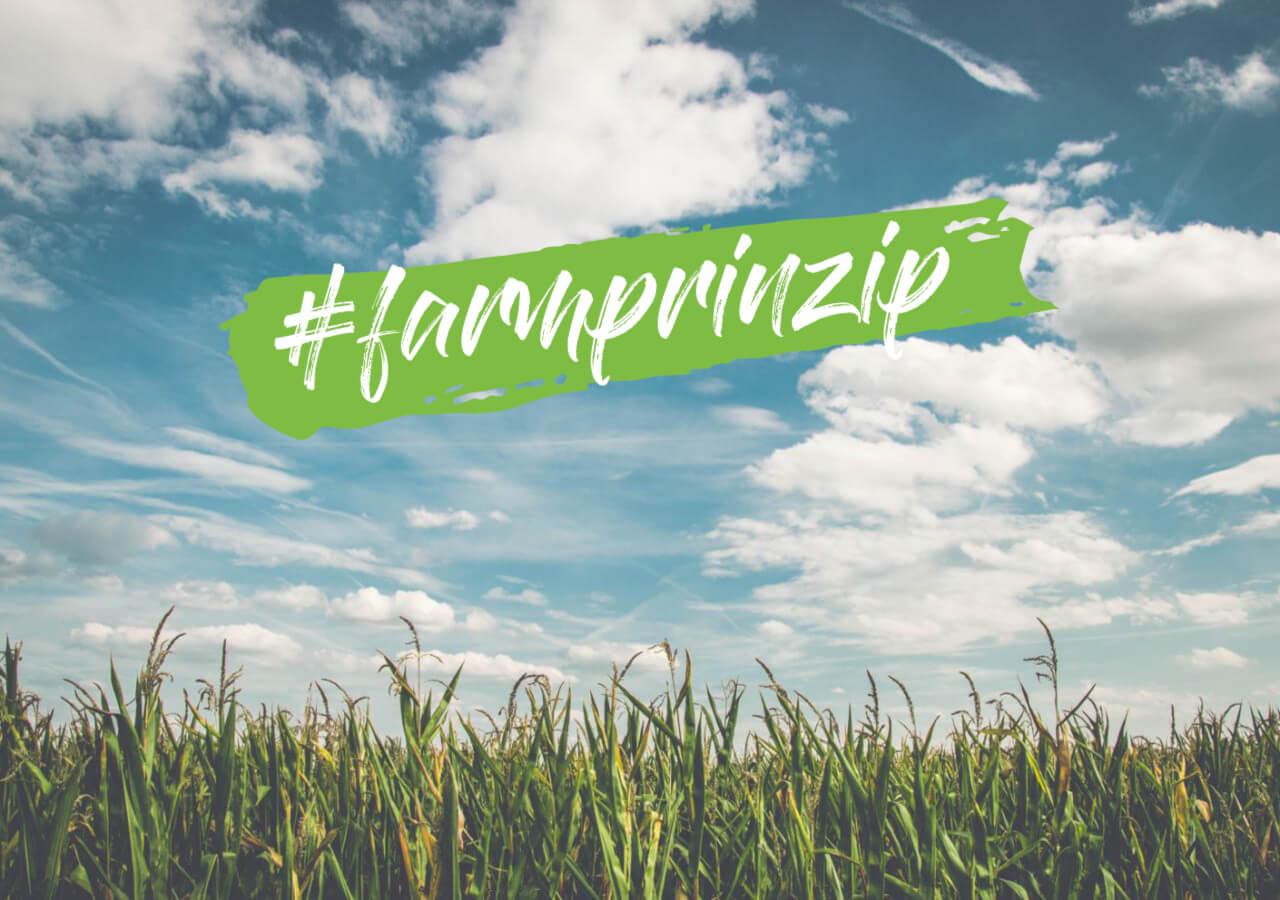 #farmprinzip – Corn field